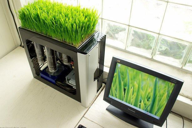 computer grows greens